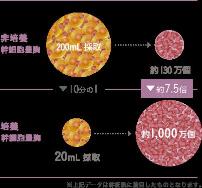 脂肪に含まれる幹細胞を増やし「質」を良くします。